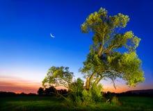 Iluminujący stary drzewo przy zmrokiem zdjęcia royalty free