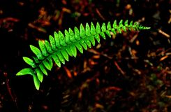 Ilusión de la naturaleza Fotografía de archivo libre de regalías