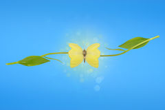 Ilusión de las alas de la mariposa del tulipán Fotografía de archivo