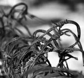 Ilustração abstrata do arame farpado Imagem de Stock