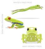 Ilustração ajustada de olhos avermelhados do vetor dos desenhos animados da rã de árvore ilustração stock