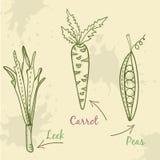 Ilustração ajustada do vegetal Alho-porro, cenoura e ervilhas Imagens de Stock