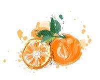 Ilustração alaranjada do vetor do fruto na pintura da aquarela Citrino tirado mão Fotografia de Stock Royalty Free