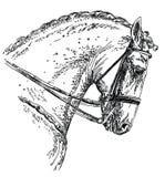Ilustração andaluza do desenho da mão do cavalo ilustração royalty free