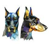 Ilustração animal da aquarela do cão do Doberman Fotos de Stock