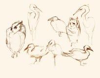 Ilustração artística de oito esboços do lápis dos pássaros Fotos de Stock