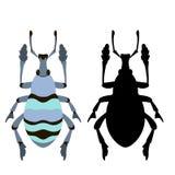 Ilustração azul do vetor do erro do besouro ilustração stock