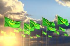 Ilustração bonita da bandeira 3d do feriado nacional - muitas bandeiras de Mauritânia no por do sol colocado na fileira com foco  ilustração do vetor