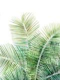 Ilustração bonita da palmeira no fundo branco ilustração royalty free
