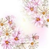 Ilustração bonita do vetor com as flores do cosmos do campo ilustração stock