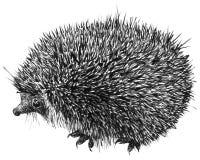 Ilustração bonito Hand-drawn do hedgehog Fotografia de Stock