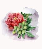 Ilustração botânica Imagens de Stock