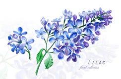 Ilustração botânica Cartão do cartão com a flor lilás azul de florescência Fotos de Stock Royalty Free