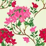 Ilustração botânica do rododendro do ramo da montanha do arbusto do vintage do vetor vermelho e cor-de-rosa da textura sem emenda ilustração stock