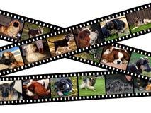 Ilustração canina do filmstrip Imagem de Stock