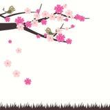 Ilustração Cherry Blossom With Bird do vetor Foto de Stock Royalty Free