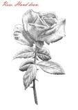 A ilustração com aumentou no fundo branco Imagem de Stock Royalty Free