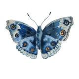 Ilustração com borboleta azul Imagem de Stock