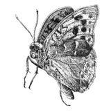 Ilustração com borboleta realística Foto de Stock Royalty Free
