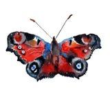 Ilustração com borboleta vermelha Foto de Stock Royalty Free