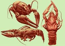 Ilustração com cânceres de várias formas Imagens de Stock