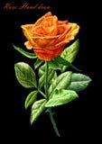 A ilustração com colorido aumentou em um fundo preto Imagem de Stock Royalty Free