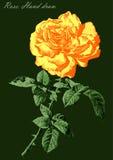 A ilustração com colorido aumentou em um fundo verde Imagem de Stock