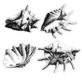 Ilustração com conchas do mar Imagens de Stock