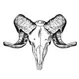 Ilustração com crânio da cabra Mão desenhada Foto de Stock Royalty Free