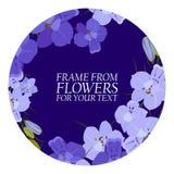 Ilustração com flores violetas, delfínio com círculos escuros Imagem de Stock Royalty Free