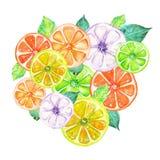 Ilustração com frutos cristalizados coloridos da aquarela Imagens de Stock