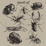 Ilustração com insetos diferentes Fotografia de Stock Royalty Free