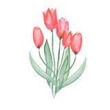Ilustração com o ramalhete de cinco tulipas vermelhas Fotografia de Stock
