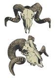 Ilustração com os dois crânios da cabra Imagens de Stock