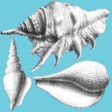 Ilustração com shell realísticos diferentes Foto de Stock Royalty Free