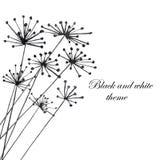 Ilustração com a silhueta preta da erva-doce Imagens de Stock Royalty Free