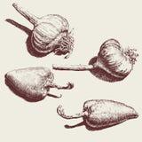 Ilustração com um alho e uma pimenta marrons Fotos de Stock Royalty Free
