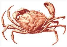 Ilustração com um grande caranguejo Imagens de Stock