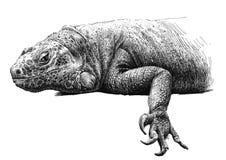 Ilustração com uma grande iguana Foto de Stock Royalty Free