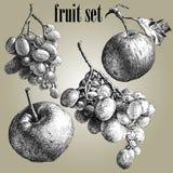 Ilustração com uvas e maçãs Imagem de Stock