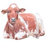 Ilustração com vaca Fotografia de Stock