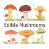 Ilustração comestível ajustada do vetor dos cogumelos tipos diferentes do cogumelo Fotos de Stock Royalty Free