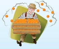Ilustração conservada em estoque do vetor Colheita Um homem recolhe laranjas Foto de Stock