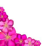 Ilustração cor-de-rosa do vetor do fundo da clematite Imagem de Stock Royalty Free