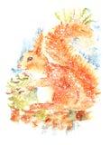 Ilustração curiosa da aquarela do esquilo pintado à mão no fundo branco Fotografia de Stock Royalty Free