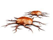 ilustração 3d de duas células cancerosas, isolada no fundo branco, Imagens de Stock Royalty Free