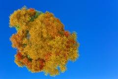 ilustração 3D do planeta com árvores do outono Fotos de Stock Royalty Free