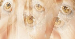 ilustração 3D dos olhos feericamente Imagem de Stock Royalty Free