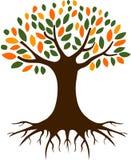 Ilustração da árvore e das raizes Imagens de Stock