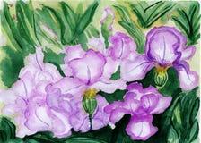 Ilustração da aguarela, as flores na flor completa Ilustração do Vetor